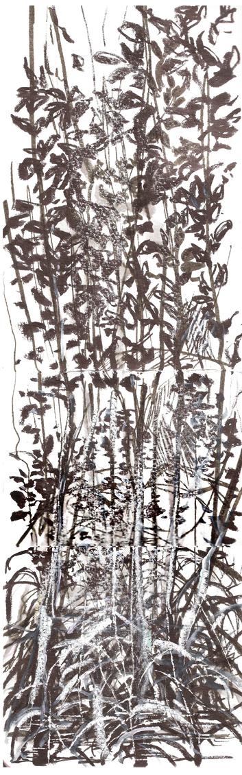 Mangrove - Ao Thalane - Krabi