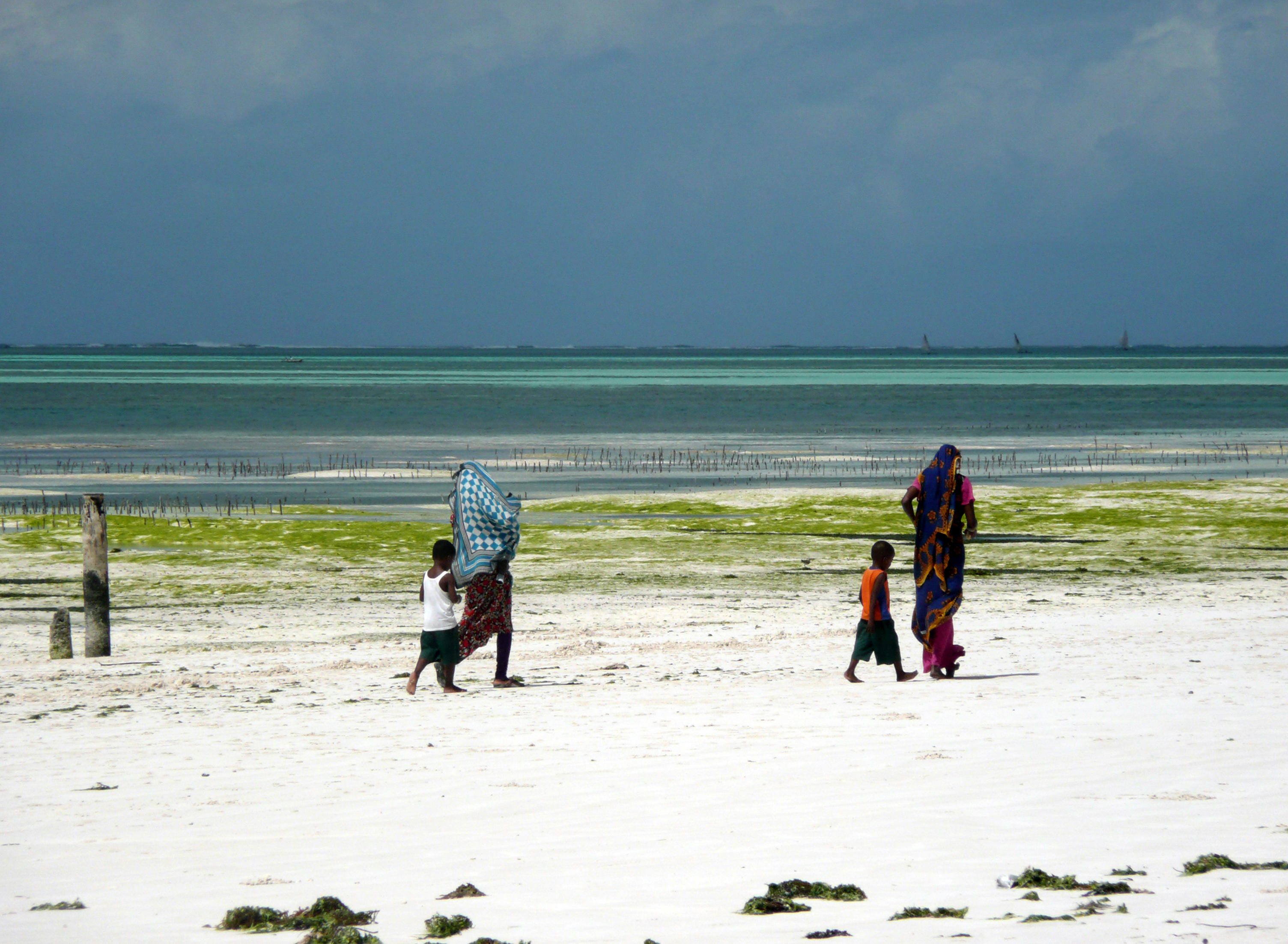 Ramasseuses d'algues, Kiwengwa, Zanzibar