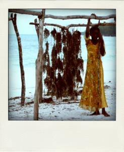 Algues séchant au soleil, Kiwengwa, Zanzibar